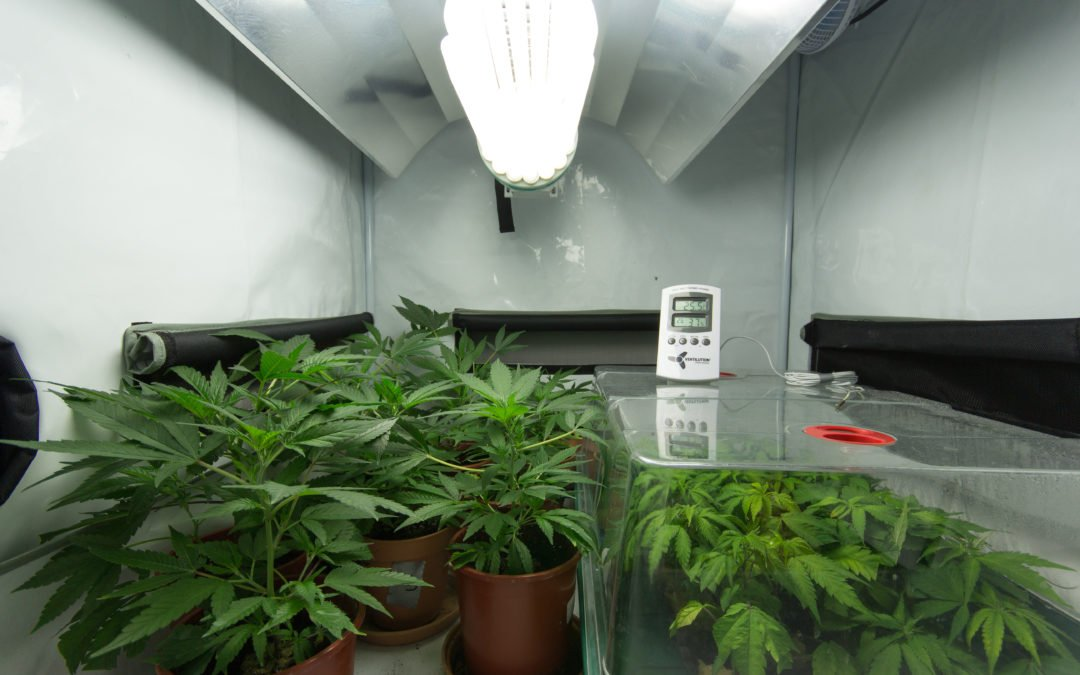 DIY Grow RoomFrom a Shipping Container